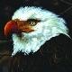 Mogwai - The Hawk Is Howling [Cd]